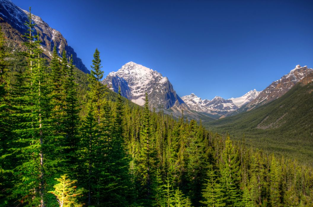 Parks Canada Forests Scenery Mountains Jasper Trees Fir Nature trees hdr wallpaper