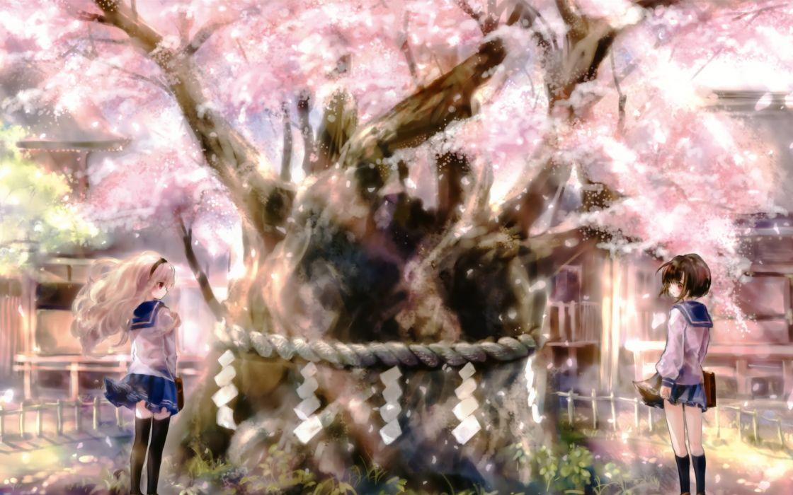 original girls cherry blossoms seifuku wallpaper
