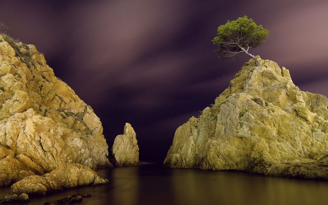 Tree Rocks Stones Night Stars Ocean wallpaper