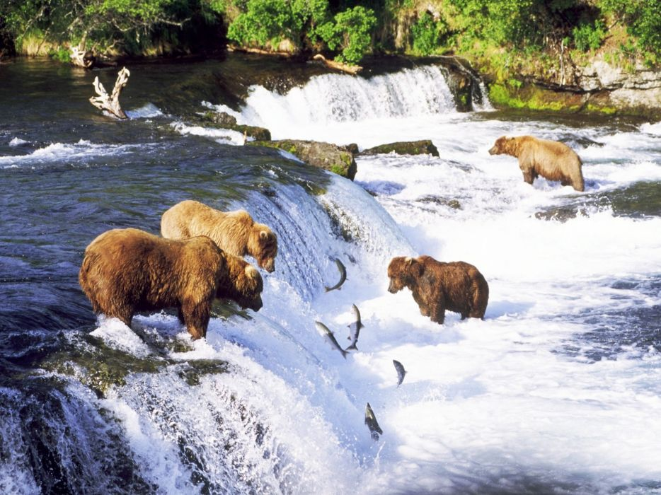 Fishing Bears wallpaper