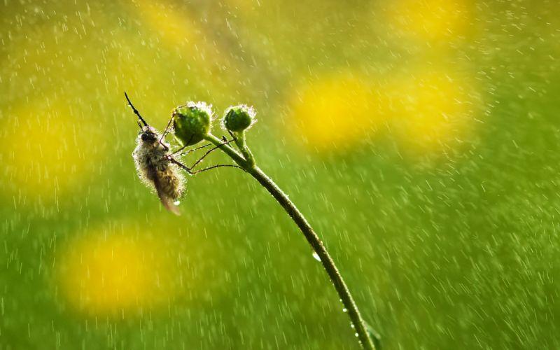 Bee Water Drops Green Plant rain bokeh wallpaper