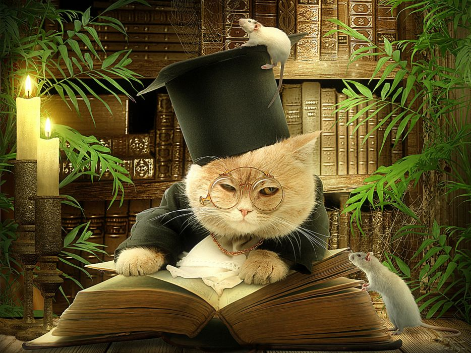 Cats Creative Hat Glasses Book Humor wallpaper
