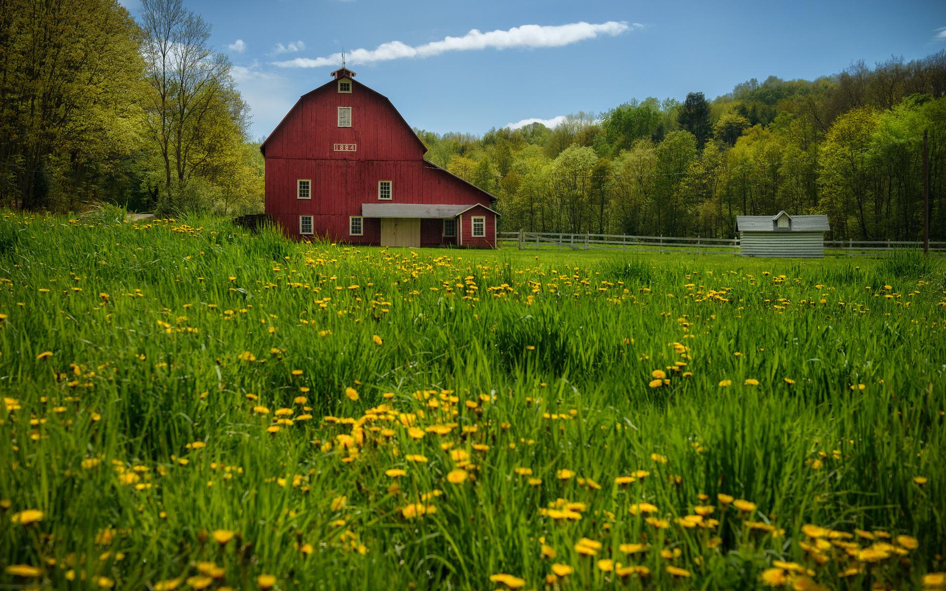 Dandelions barn trees meadow wallpaper 1920x1200 97524 for Meadow house