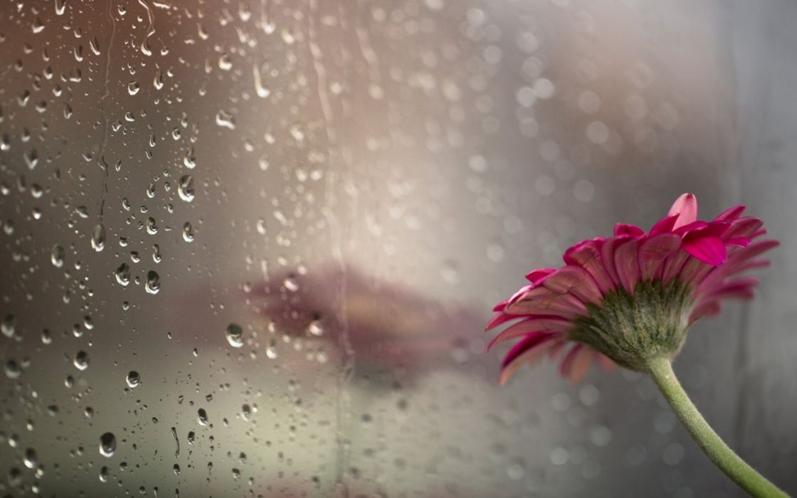 drops flower glass rain bokeh wallpaper