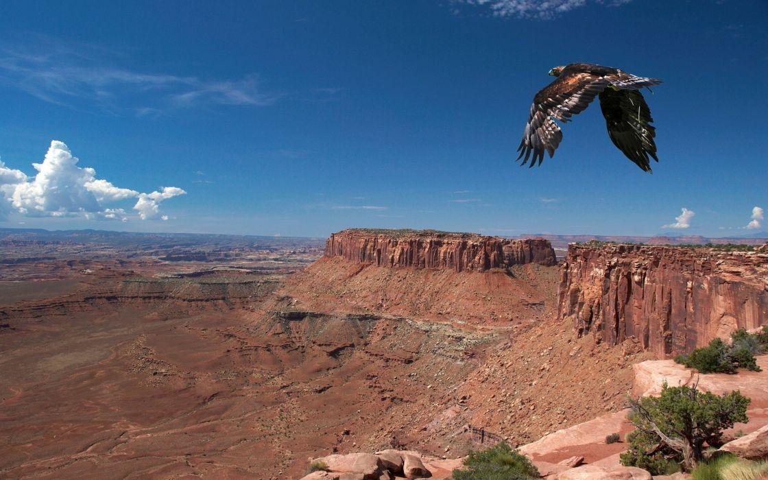 eagles eagle wallpaper