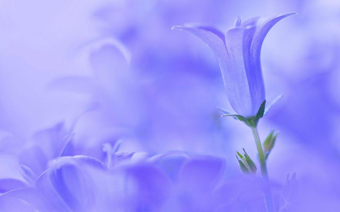flowers flower wallpaper