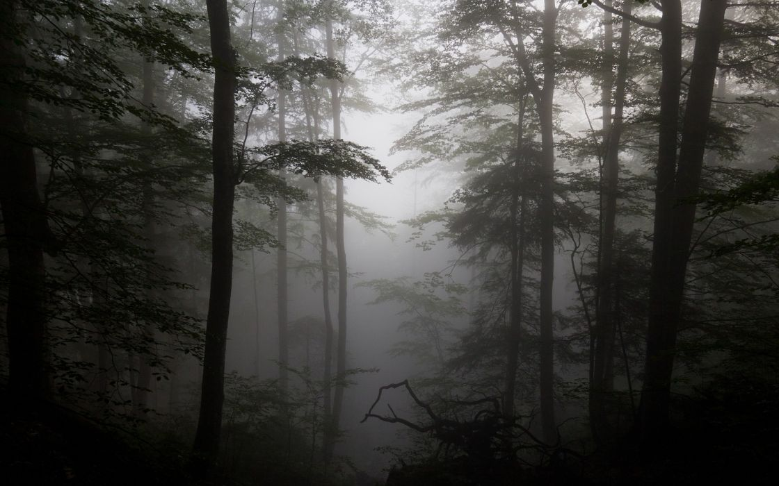 forest fog driftwood silhouettes trees wallpaper