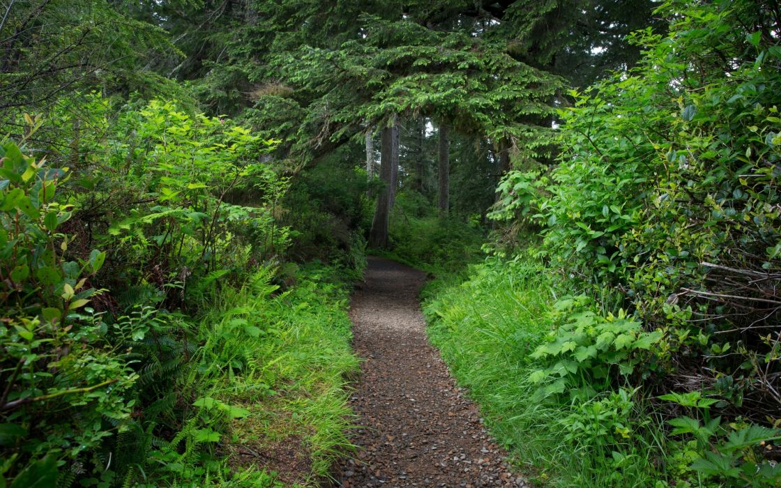 forest track trees nature wallpaper
