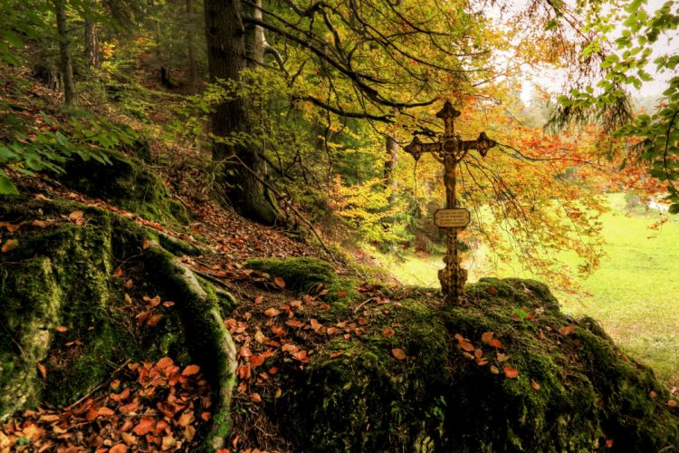 Forests Autumn Foliage Cross Moss Nature gothic wallpaper