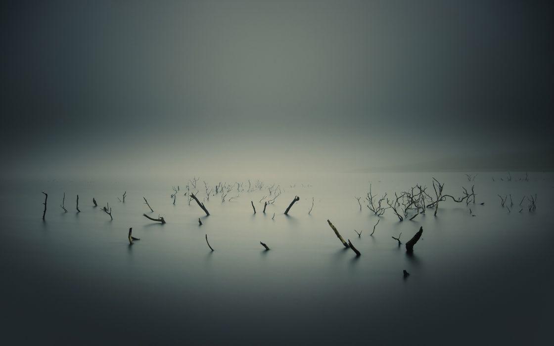 Lake Sticks Branches wallpaper