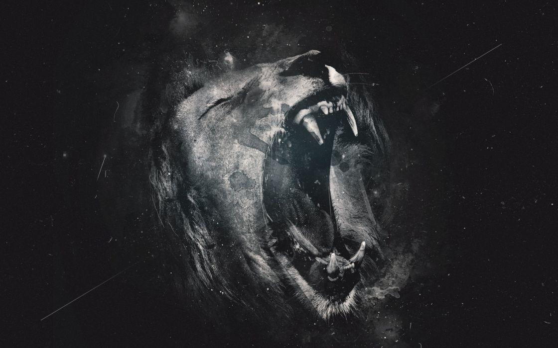 lion lions wallpaper