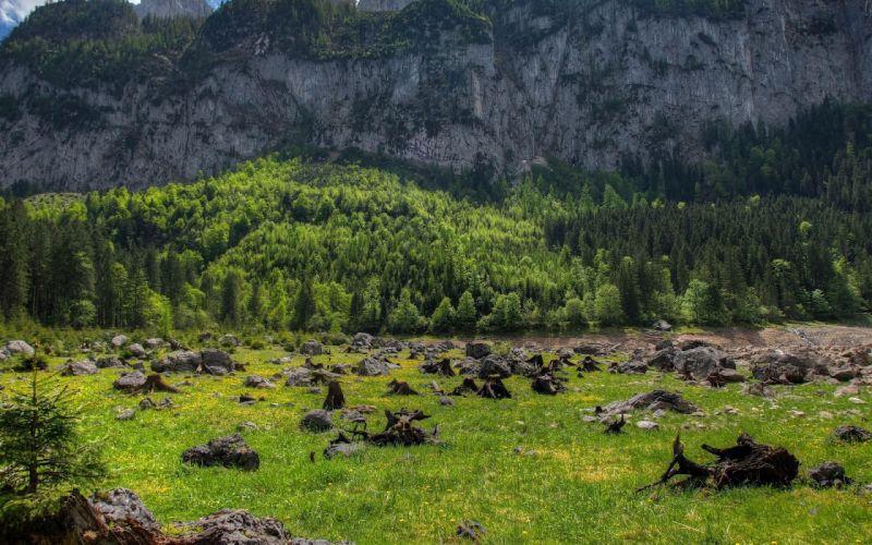 mountains trees rocks driftwood landscape austria wallpaper
