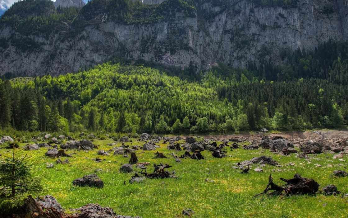 mountains trees rocks driftwood landscape austria wallpaper