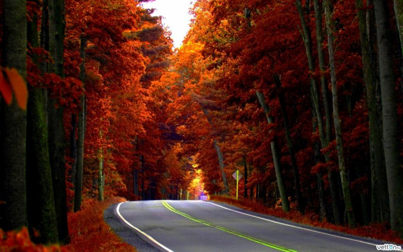 road forest trees autumn d wallpaper