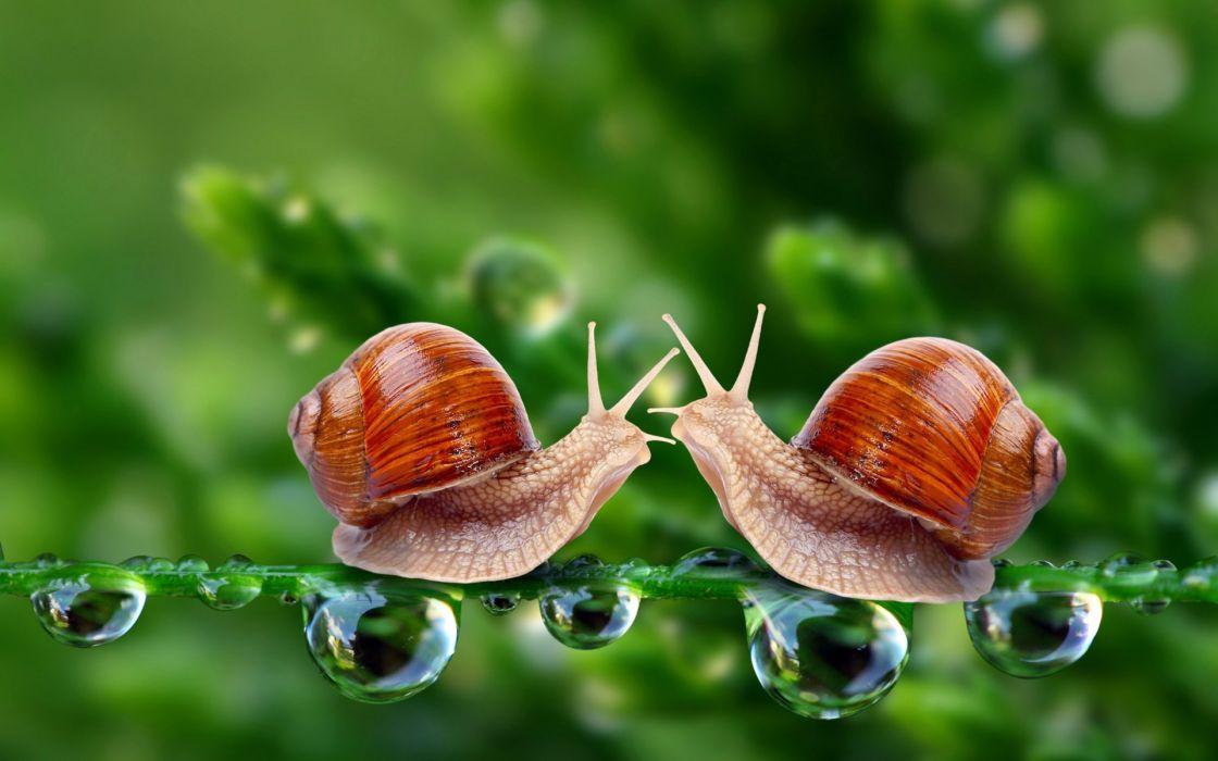 snails macro drops meeting wallpaper