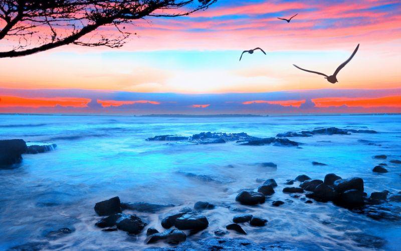 sunset seagulls sea landscape wallpaper
