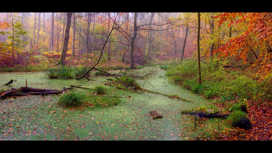 autumn forest marsh landscape wallpaper