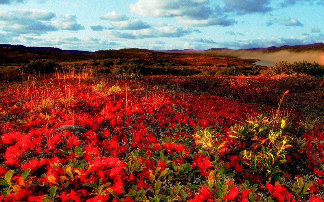 field flowers sky landscape e wallpaper