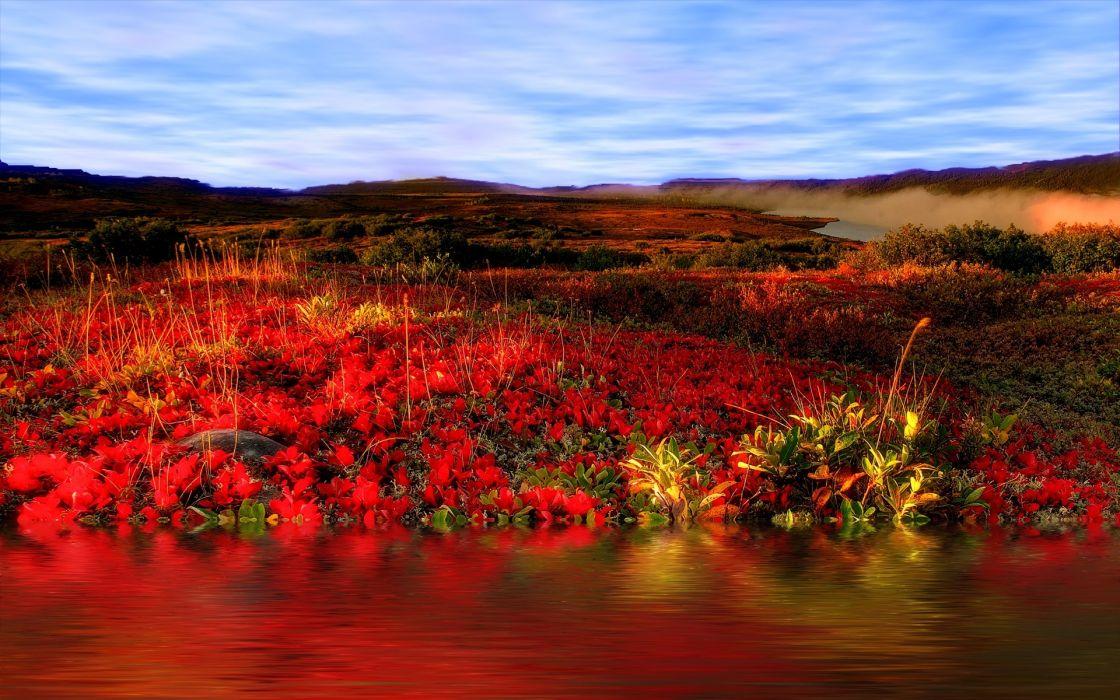 field flowers sky landscape wallpaper