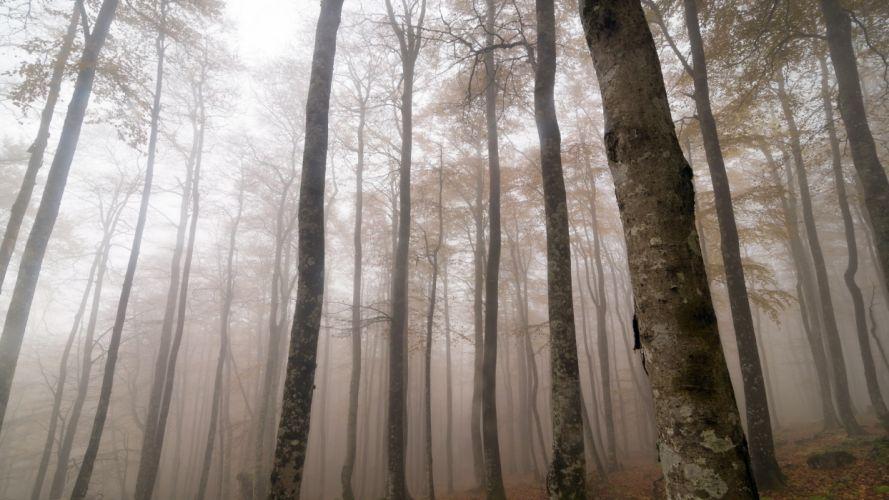 forest mist nature landscape fog wallpaper