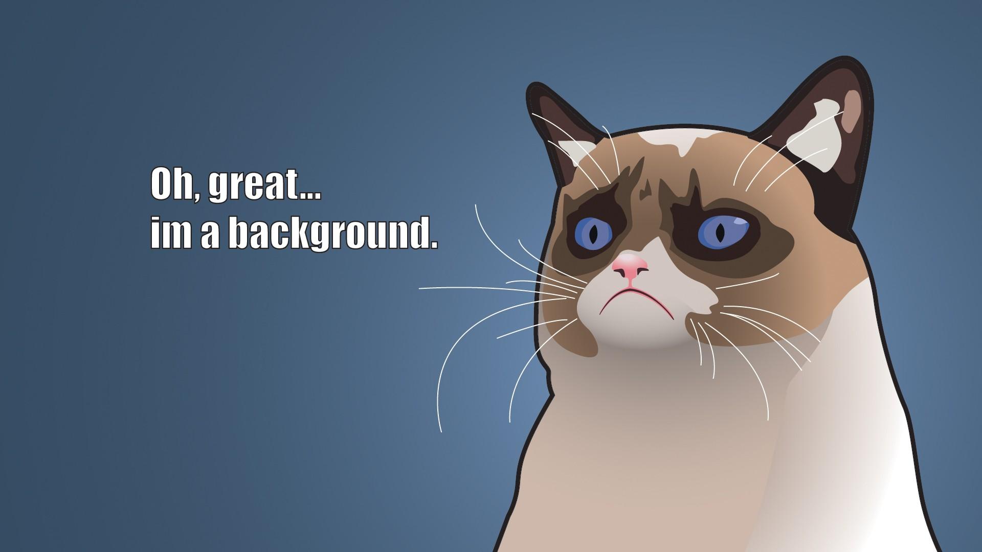 Pics funny cats of