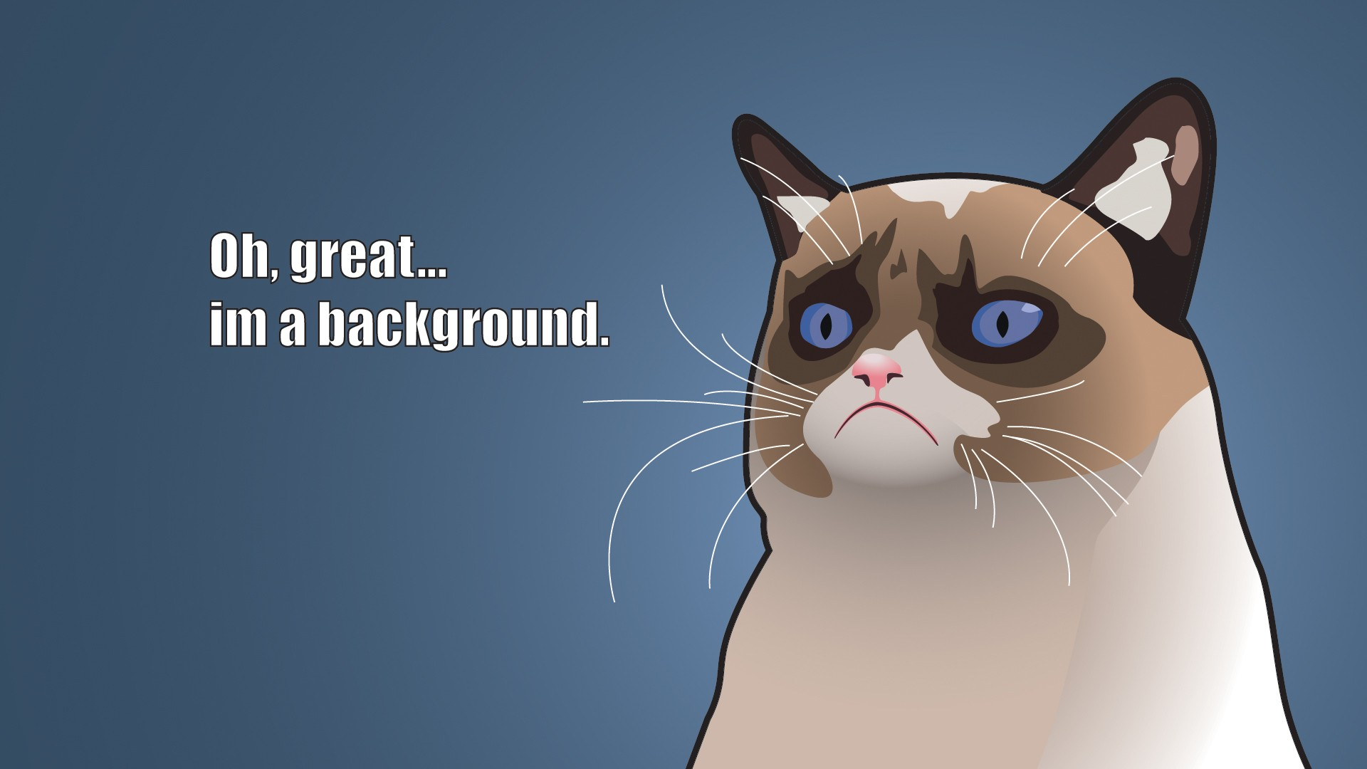 Funny Grumpy Cat Videos