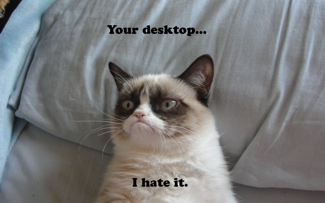 Funny Meme Phone Wallpapers : Grumpy cat meme pictures humor funny cats wallpaper 1920x1200