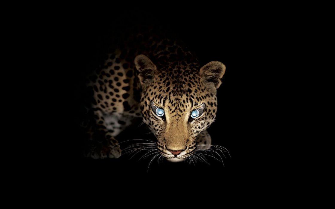 Big cats Leopards Animals Leopard wallpaper