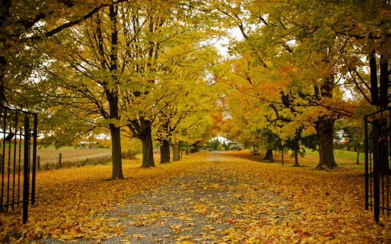 autumn leaves trees wallpaper