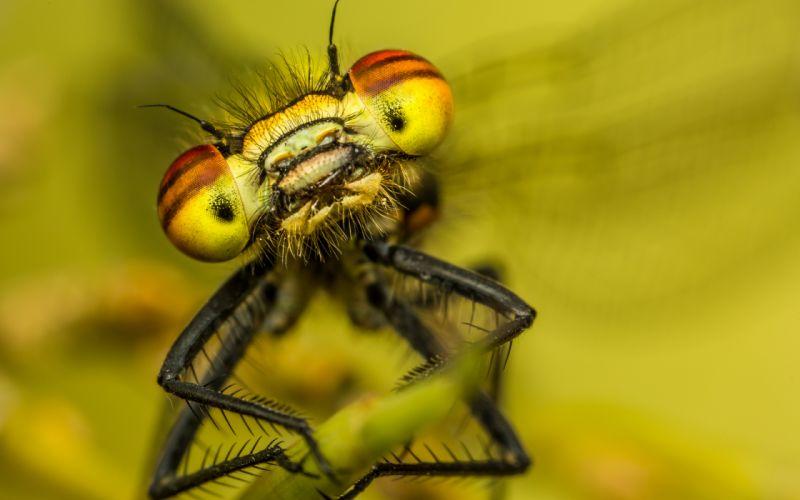 Bug Macro wallpaper