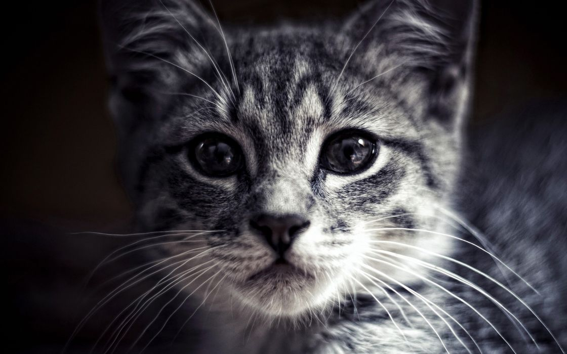Cat kitten kittens cats wallpaper