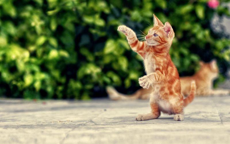 cat kitten cats wallpaper