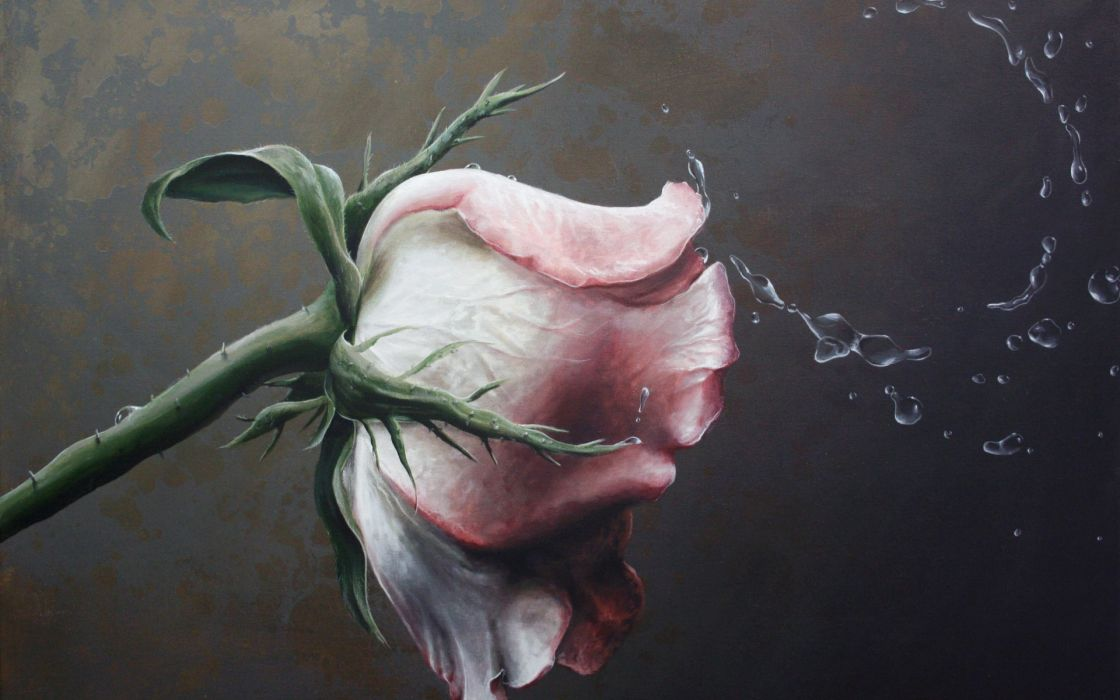 Traditional Art  paintings  still life  still life  roses  painting flower drops flowers wallpaper