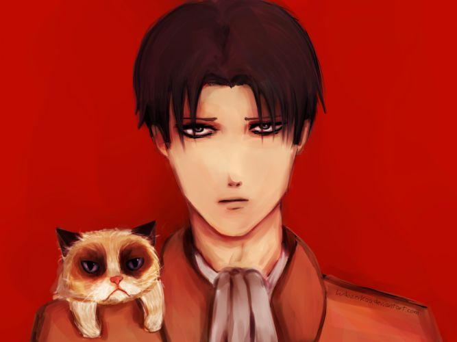 Shingeki no Kyojin Rivaille cat cats wallpaper