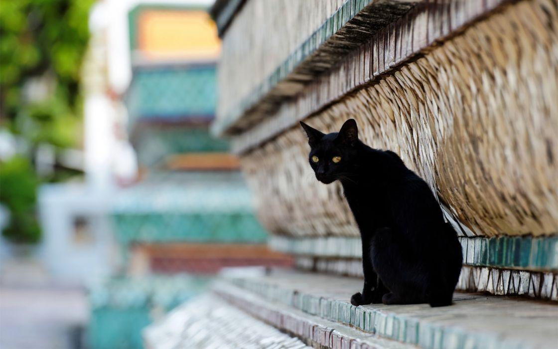 cat black wallpaper