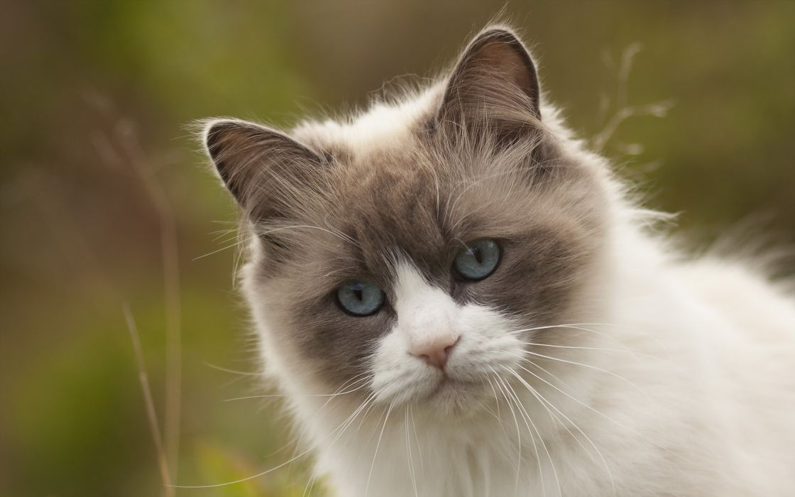 Cat Glance Animals wallpaper