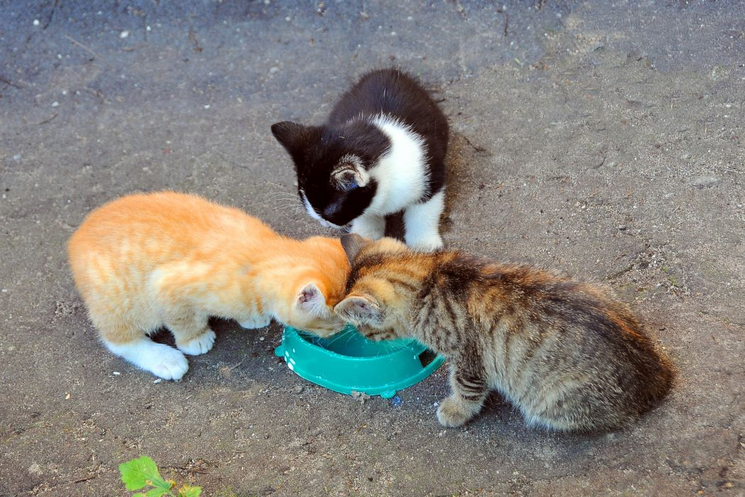 Cats Kittens Animals wallpaper