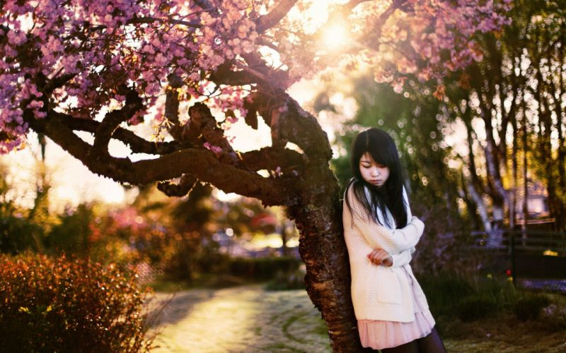 Cherry Blossom Flowers Tree Asian Brunette Sunlight mood wallpaper