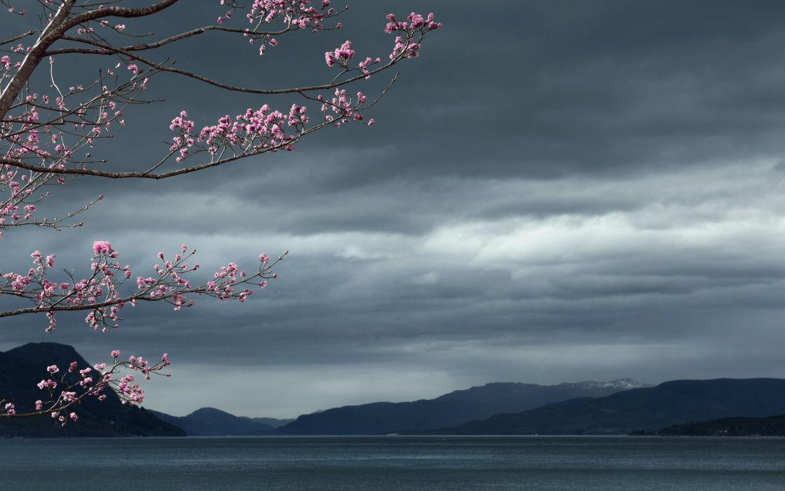 Cherry Blossom Flowers Tree Lake wallpaper