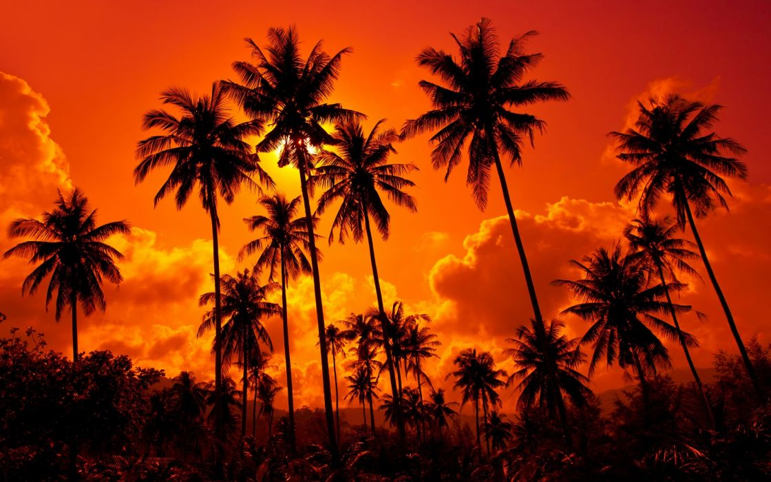 Coconut palms sand beach sunset_ Thailand beautiful nature landscape sky clouds  f wallpaper