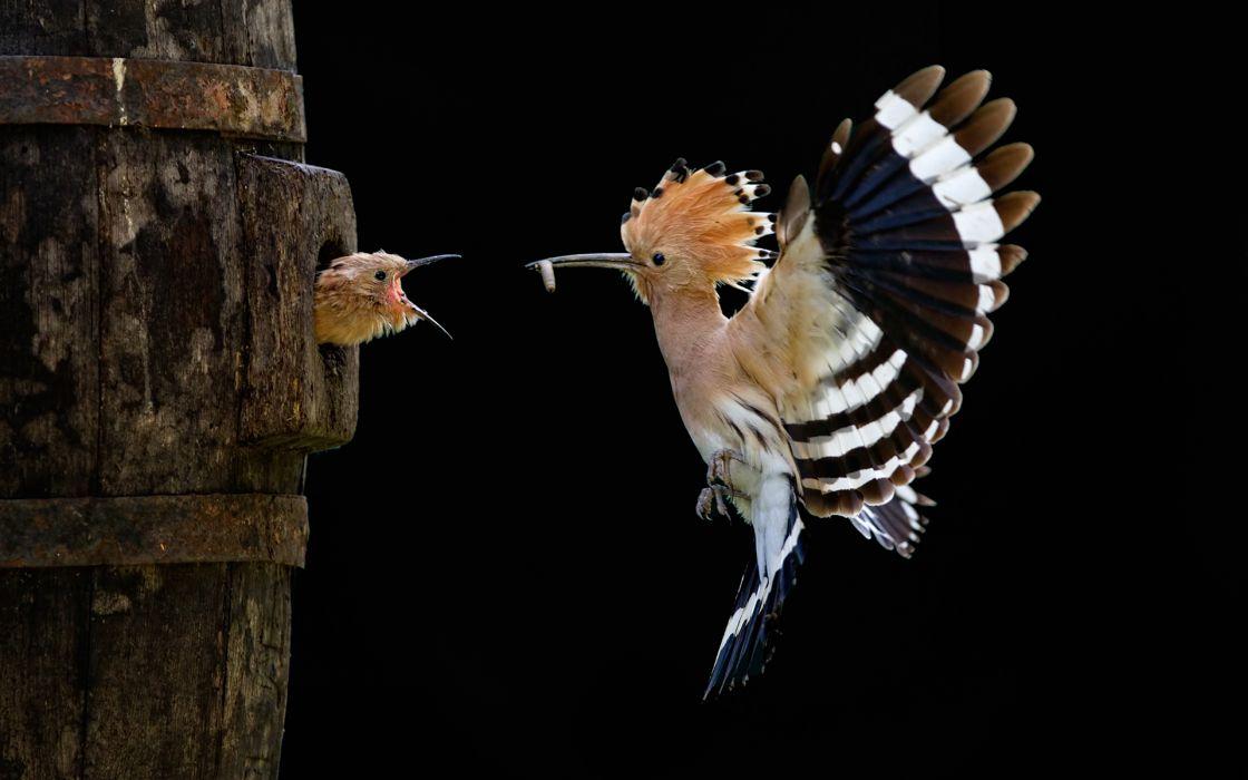 Daft Punk bird birds chicks chick wallpaper