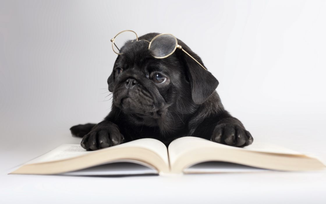 Dogs Black Pug Glasses Book Animals Humor Puppy Wallpaper