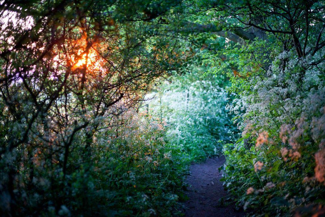 Flowers Path Trail Sunlight wallpaper