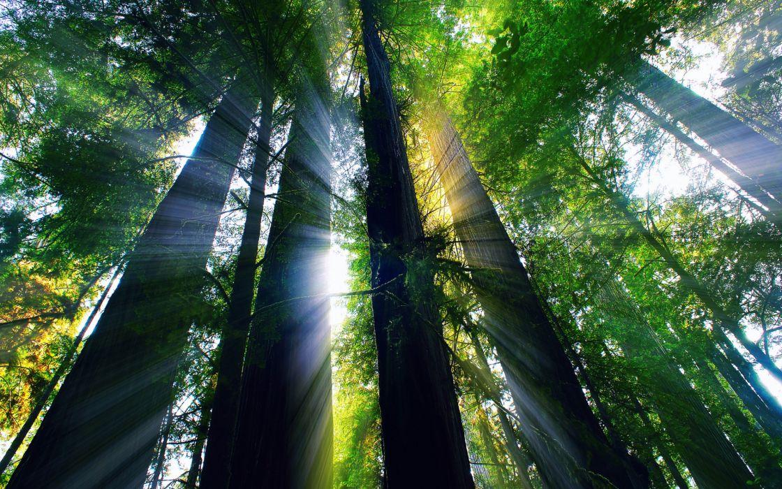 forest light rays summer    g wallpaper