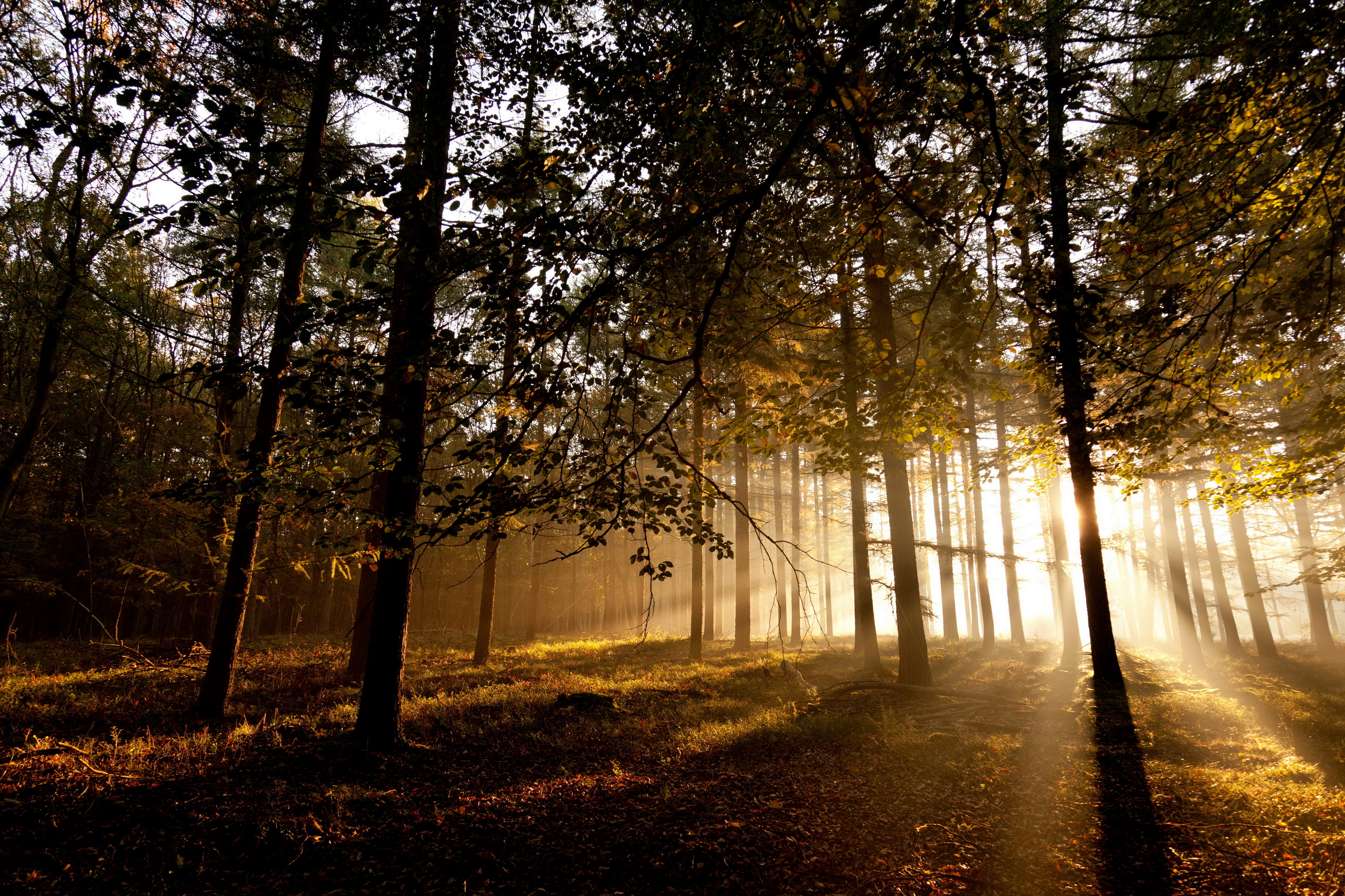 Forests Trees Rays sunlight wallpaper | 3872x2581 | 100584 ...