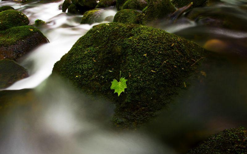 Leaf Moss Rocks Stones Stream wallpaper