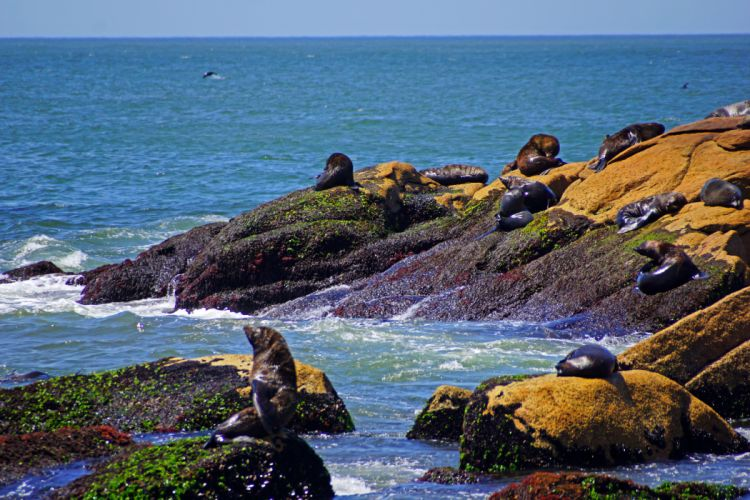 Nature seal seals ocean shore sea wallpaper