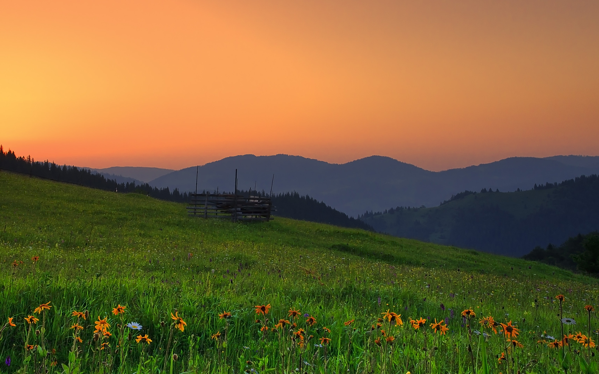 Romania hills sunset field flowers landscape wallpaper for Romania landscape