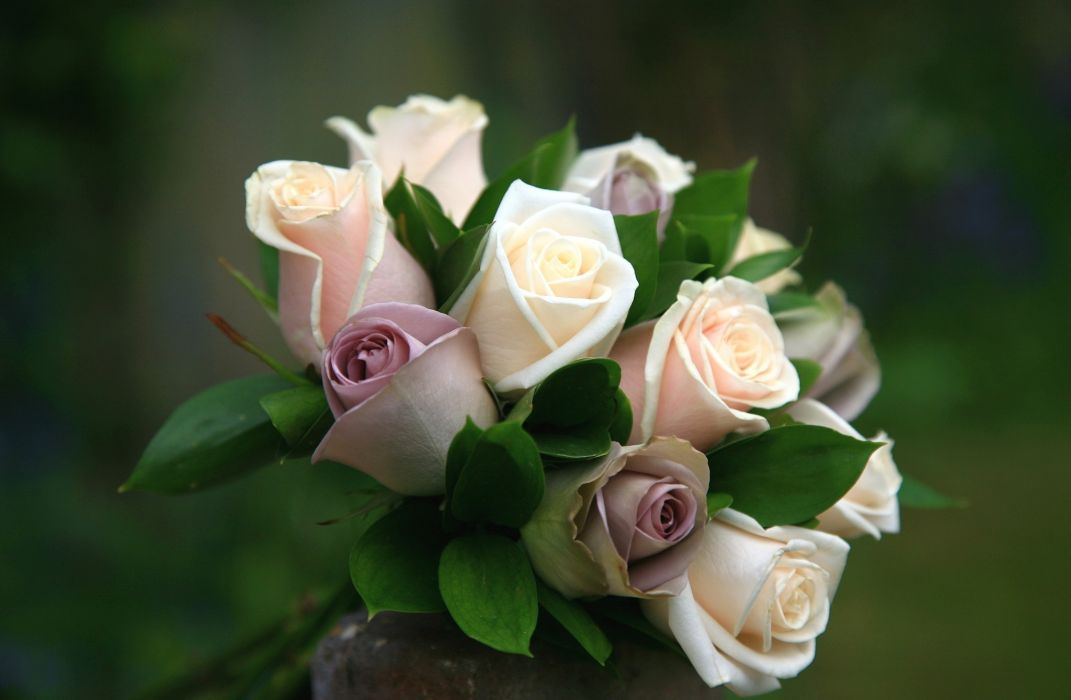 Roses Bouquets Flower wallpaper