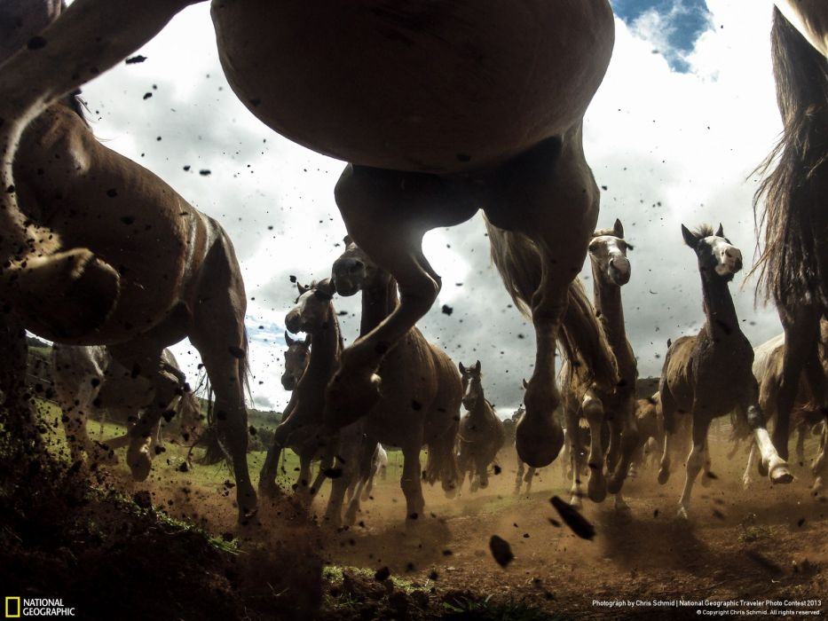 Stampede Horse Run wallpaper